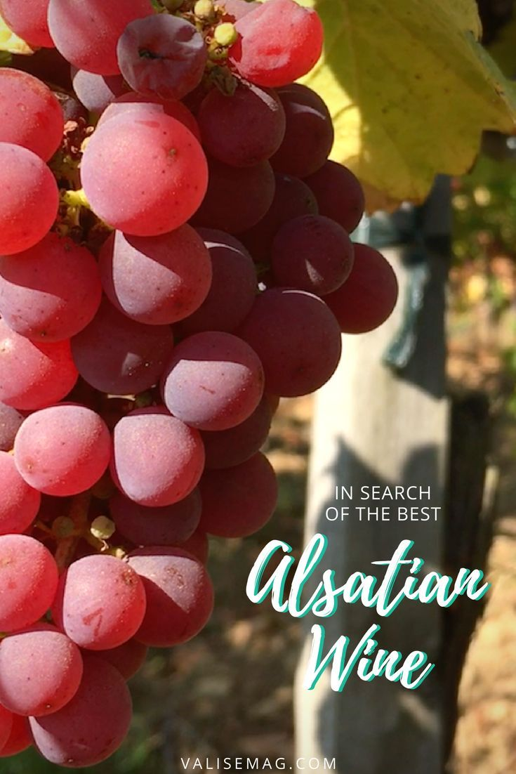 In Search Of The Best Wine In Alsace With Ophorus Tours Best Of Valerie Valise Pinterest