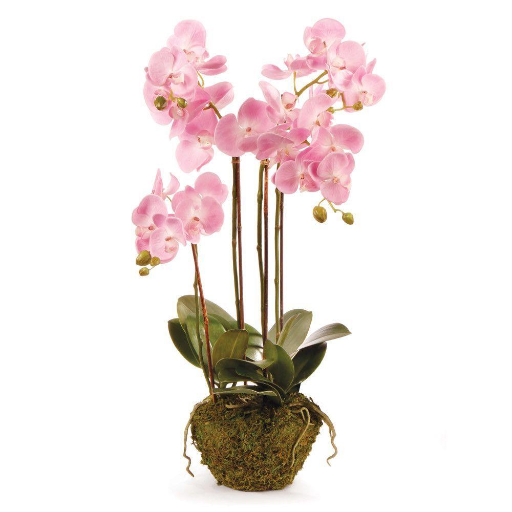 DropIn Phalaenopsis Phalaenopsis, Phalaenopsis orchid