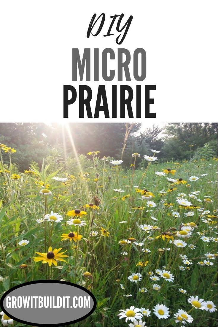 How To Make a MicroPrairie Native plant gardening, Low