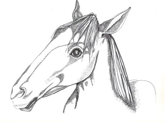 horse cheval is a black white dotted drawing by suzanne berton using ink on