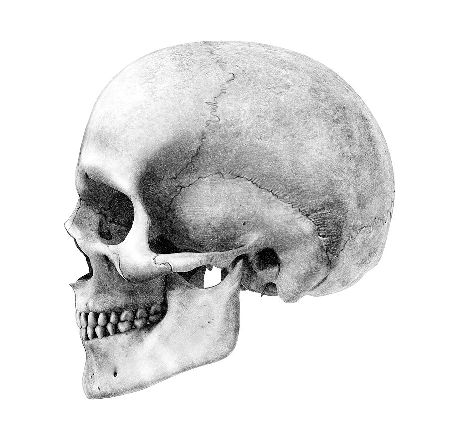 This is an image of Remarkable Skull Profile Drawing