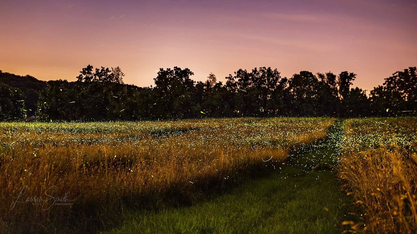 Firefly Field Experiment   Night photography, Island of the lost ...