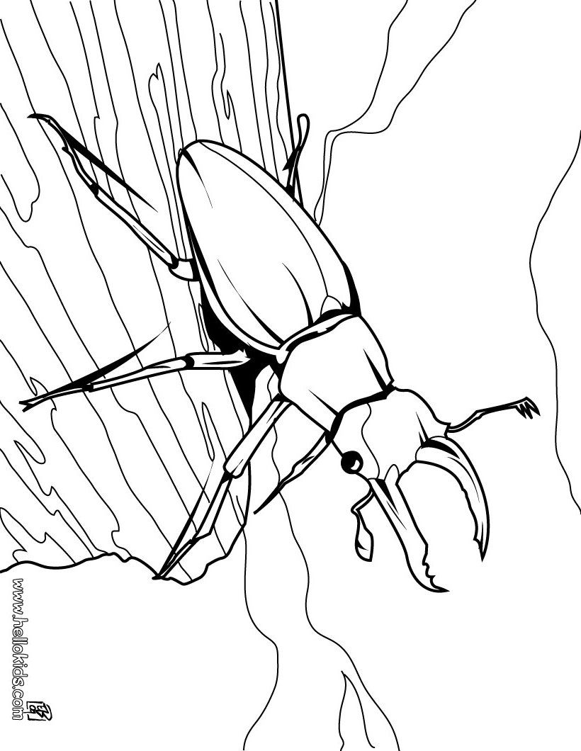 Stag Beetle Coloring Page Cute And Amazing Farm Animals Coloring