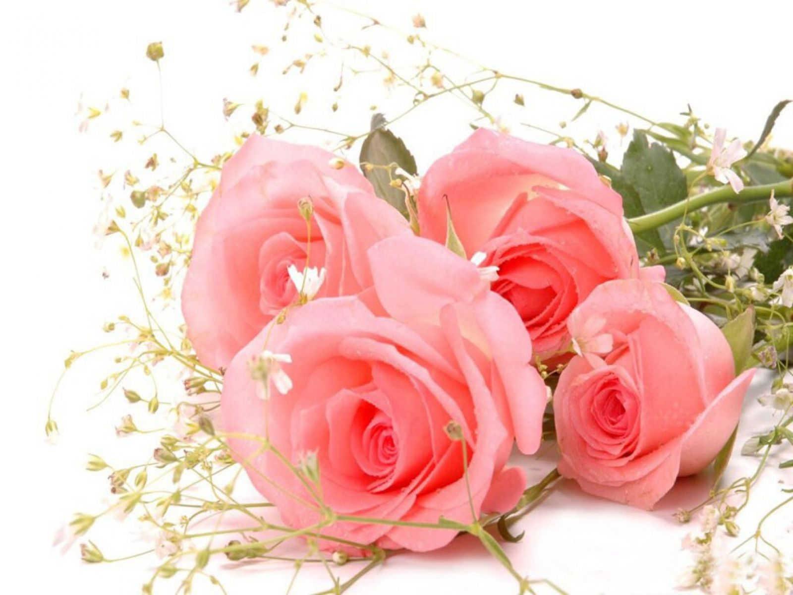 Pink Rose Flower Desktop Image