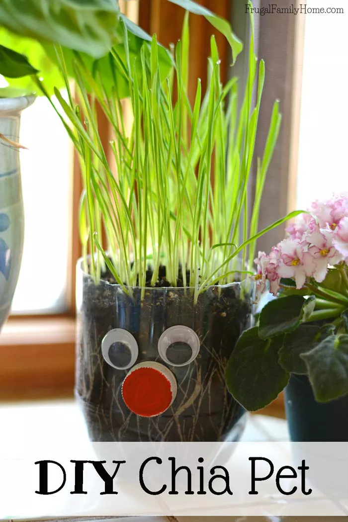 Gardening Projects for Kids in 2020 | Fun diy kids crafts ...