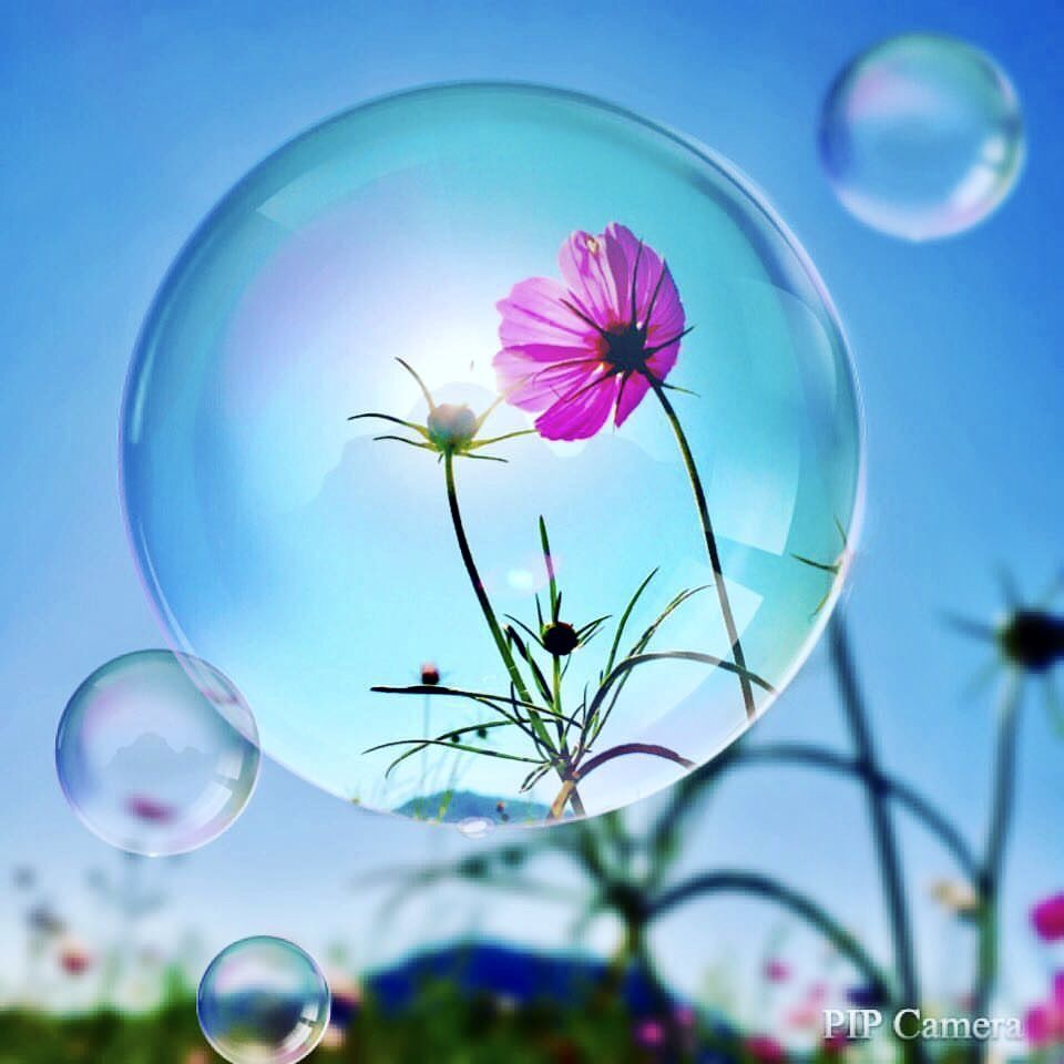Cosmos in the soap bubble