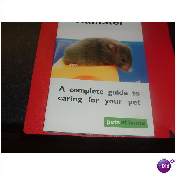 Hamster Listing In The Hamsters Pets Home Garden Category On