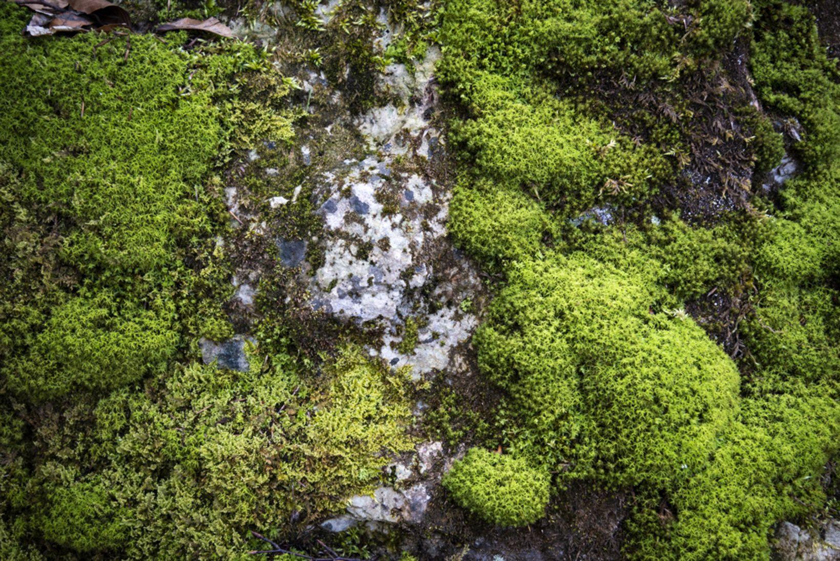 Moos Makro Blumen Altmuhltal 12apostel Bavaria Bayern Panoramaweg Wandern Natur Nature Urdonau Entspannung Landschaft Instagood Picoftheda Plants