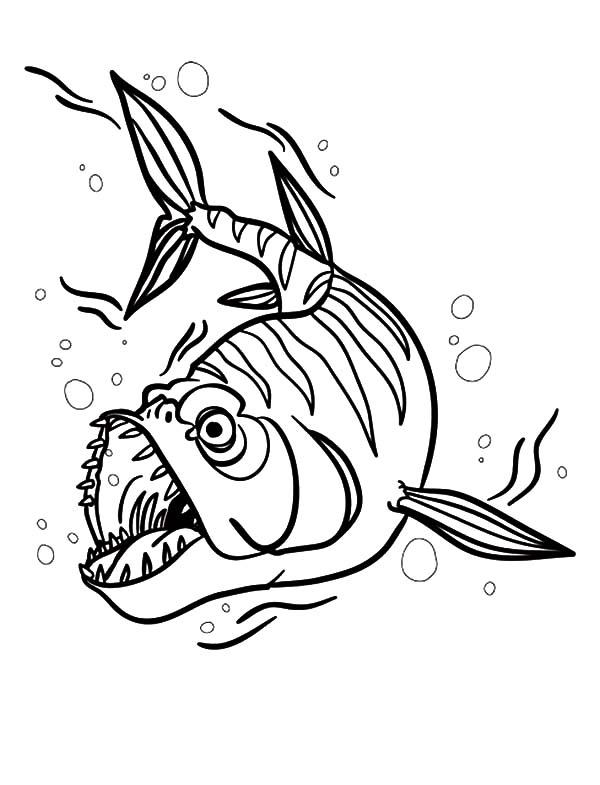Barracuda Fish Attack Coloring Pages Best Place To Color Coloring Pages Fish Coloring Page Coloring Pictures