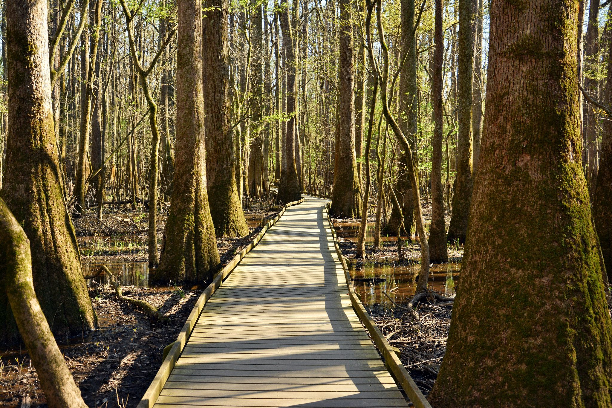 These 5 Amazing Cypress Swamps In South Carolina Will Drop Your Jaw