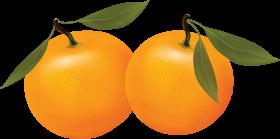 Orange PNG image, free download