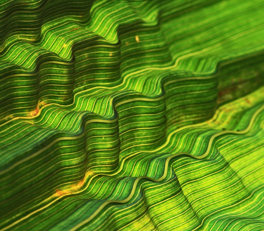 The Leaf by Ceri Jones - Photo 116737151 / 500px