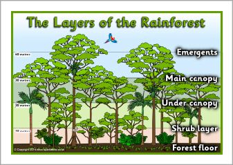 Layers Of The Rainforest Posters Sb10831 Sparklebox