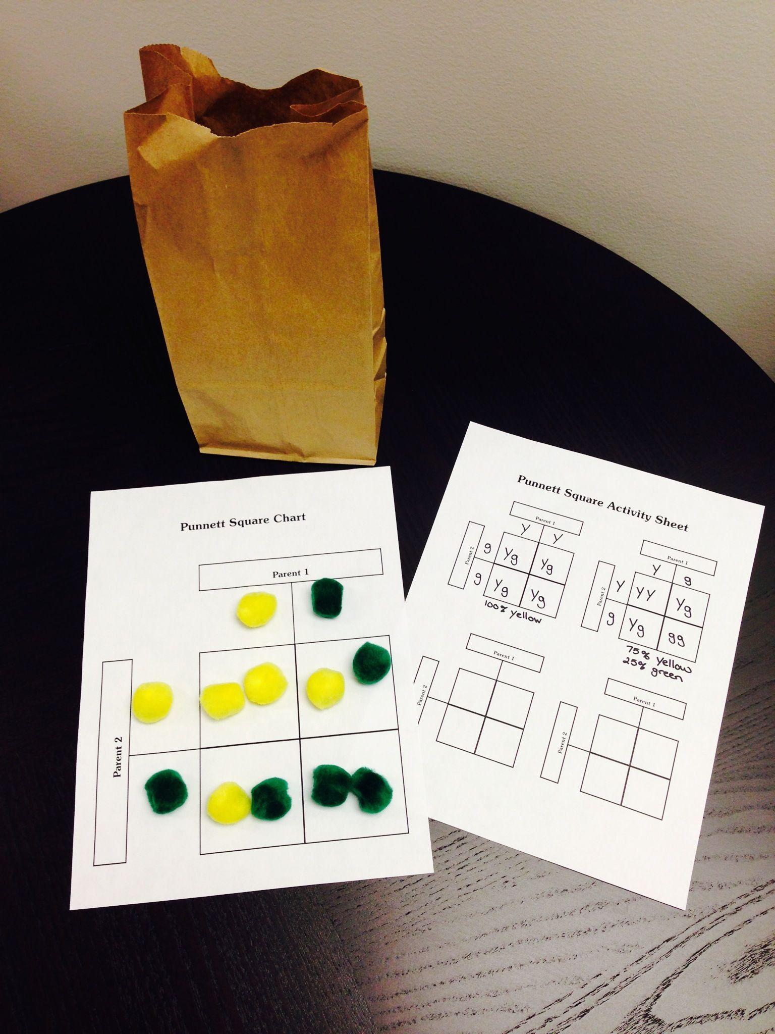Pea Plant Punnett Square Worksheet Punnett Squares Punnett Square Activity Teaching Biology