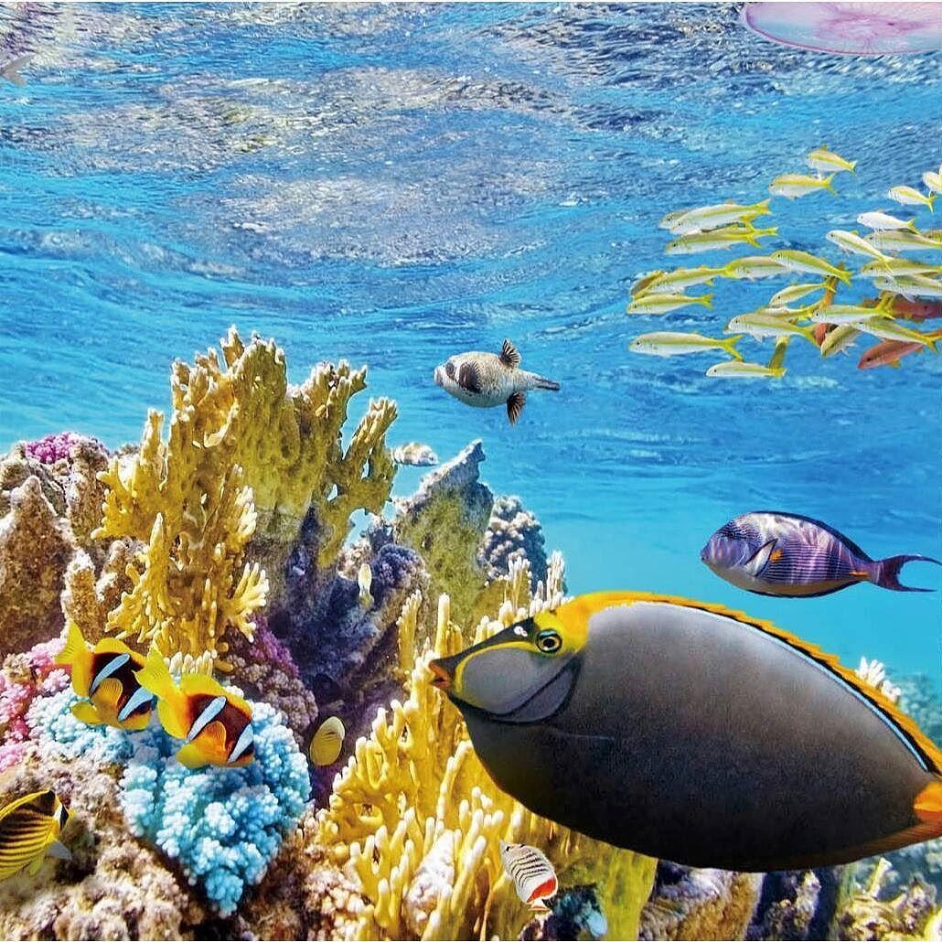 12月3日の絶景はグレートバリアリーフ . オーストラリアの北東部に2000km以上に渡って広がる世界最大の珊瑚礁絶滅危惧種も多く存在しクジライルカウミガメをはじめ数え切れないほどの熱帯魚がカラフルで美しい珊瑚の中を泳いでいる . 世界中から集まるダイバーだけでなく初心者でもシュノーケリングやヘルメットをつけての海底散歩を楽しむことができる . TABIPPOの新書籍365日 世界一周絶景の旅から抜粋発売まであと8日 . #tabippo #paspol #365days #travel #Australia #beach #island #coralreef #sea #fish #GreatBarrierReef #diving #snorkelling #オーストラリア #グレートバリアリーフ #サンゴ礁 #ダイビング #オセアニア #世界遺産 #旅 by tabippo http://ift.tt/1UokkV2