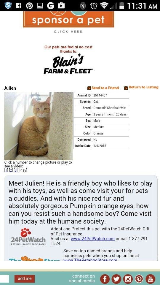 Humane Society Of Southern Wisconsin Humane Society Cat Breeds Wisconsin