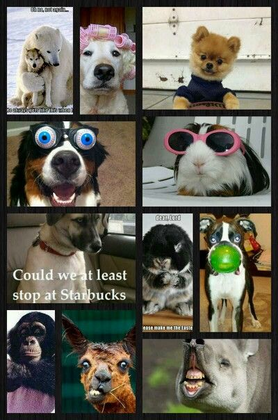 Funny Picture Collage : funny, picture, collage, Funny, Animals, Collage, Animals,, Beautiful