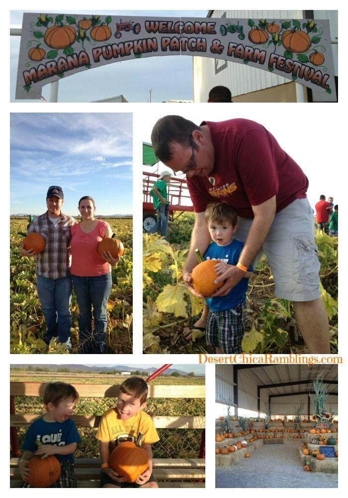 Marana Pumpkin Patch and Farm Festival Adventure