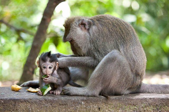 Sacred Monkey Forest Bali | papertravels.com