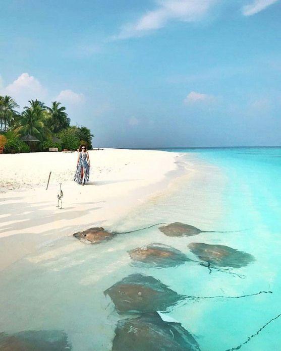 The Maldives Islands Maldives Borabora Bora Bora