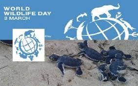 Image result for world wildlife day