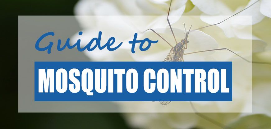 how to kill mosquito larvae in pool