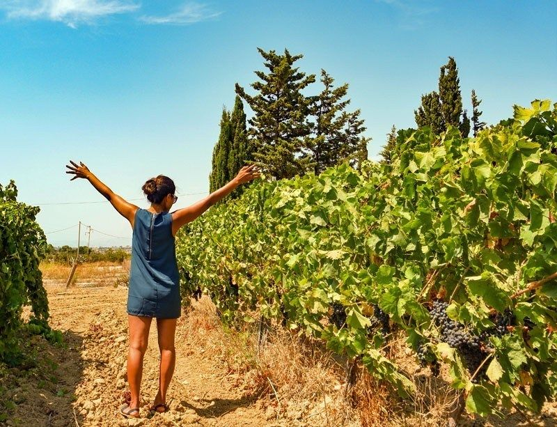 Discover the Sicily's majestic wine country | 10 Top Rated Tourist Attractions In Sicily
