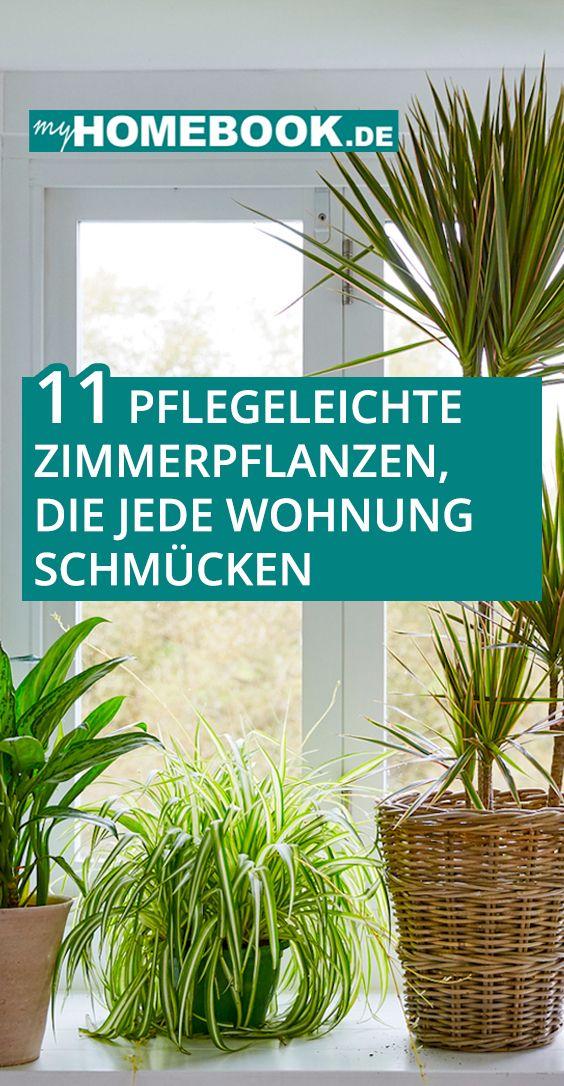 11 pflegeleichte Zimmerpflanzen, die jede Wohnung schmücken