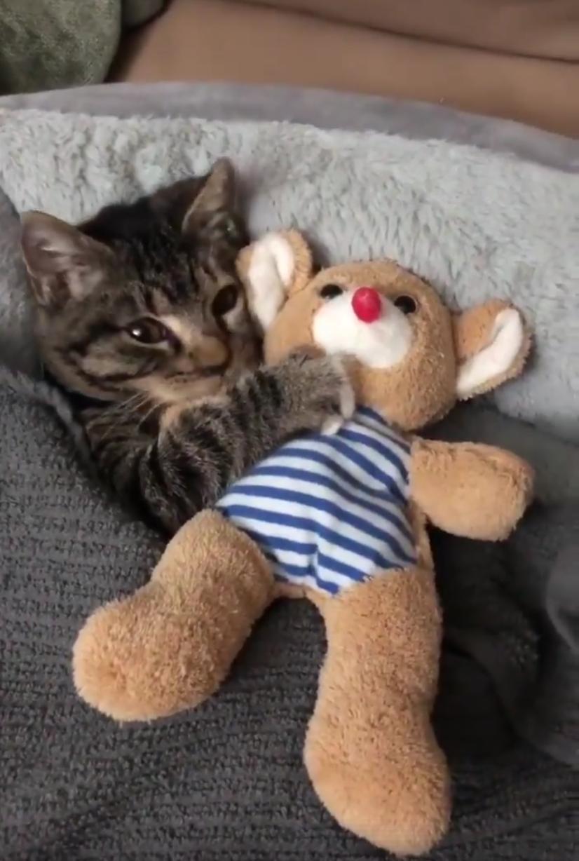 Cuddly kitten with cuddly toyhttps//i.redd.it