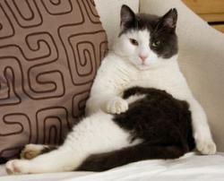 3 explanations for your cat's weird positions cats are as
