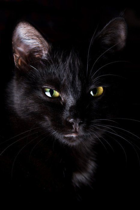 merveilleuse chatte noire