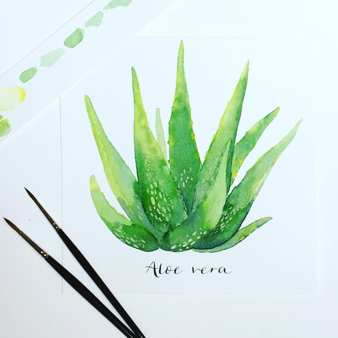 Aloe Vera drawing Tattoos t Coloring pages Color and