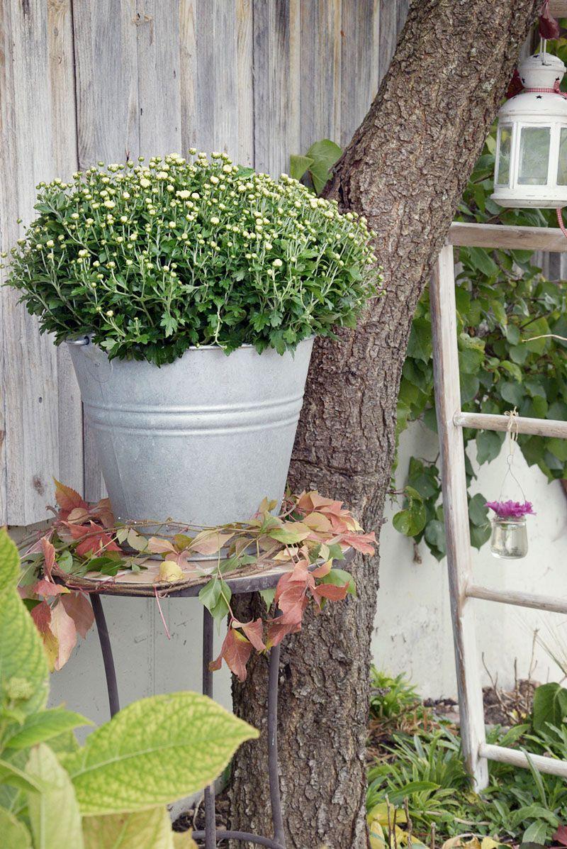 Mein Schones Land Saisonale Rezepte Gartentipps Kreativideen Idyllische Regionen Und Vieles Mehr Entdecken Sie Mit Uns Die Schonsten Seiten Des Landleben Herbst Dekoration Garten Gartendekoration