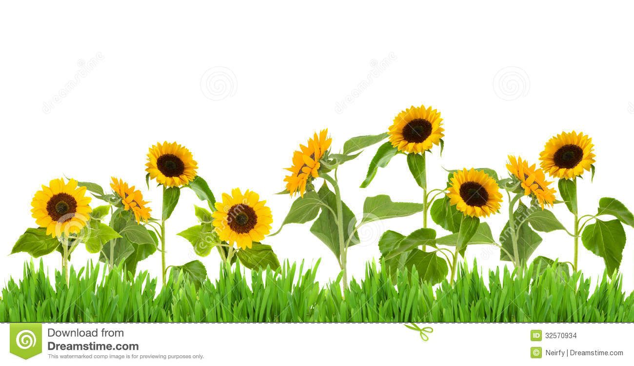 Sunflower Border Clip Art Widescreen 2 HD Wallpapers | ve ...