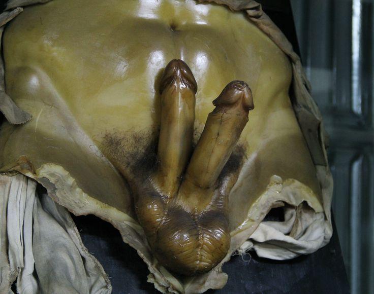 Museo de Anatomía «Javier Puerta» de la Facultad de Medicina de la Universidad Complutense de Madrid. - Google Search