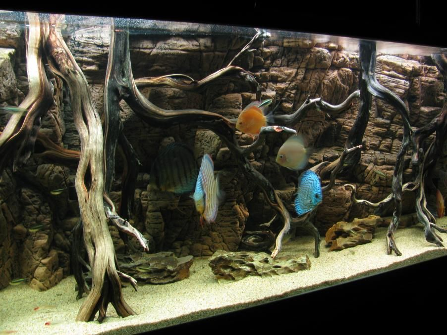 Our 155 Gallon Planted Aquarium With Aquaterra 3d Background Page 14 Planted Aquarium Discus Aquarium Fish Aquarium Decorations