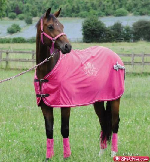 Sarah Jessica Parker Horse