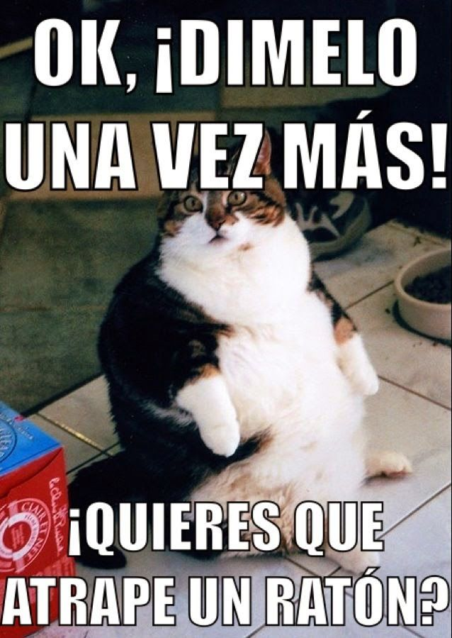 Meme Gordos Gorditos Chistosos Dieta Chistes Cat Exercise Funny