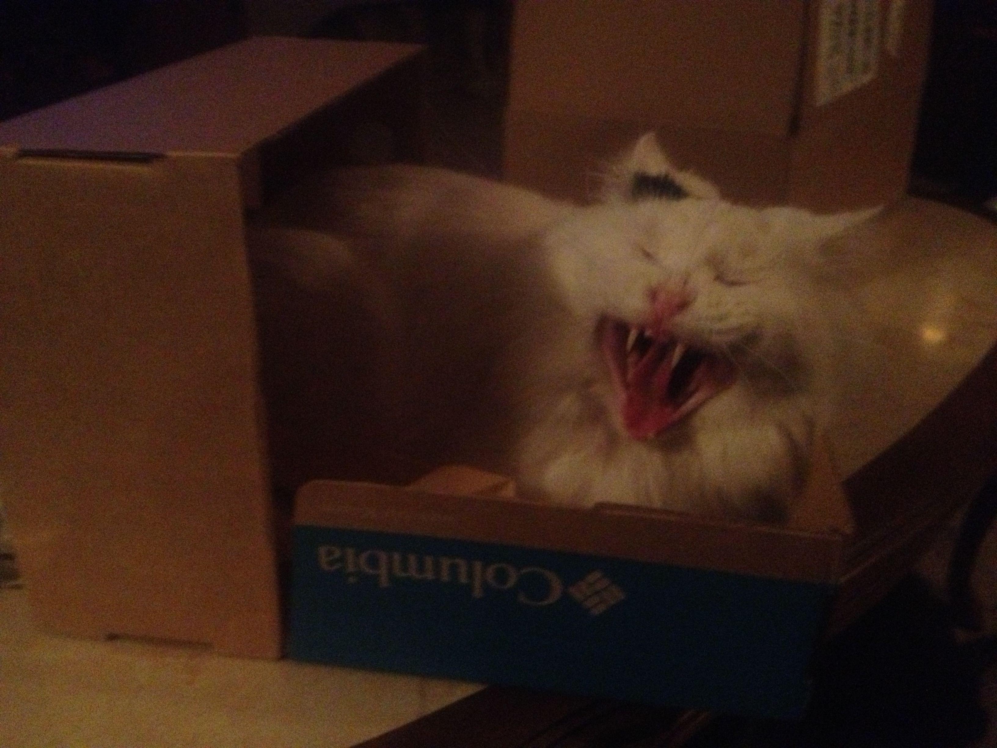 Insane Cat Posse