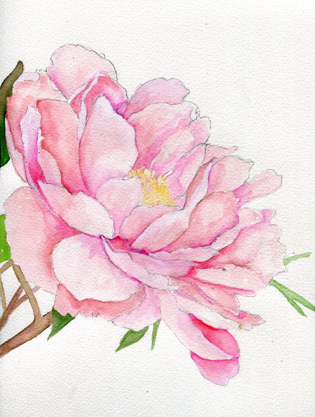 Watercolor Peonies Tumblr Watercolor Peonies Floral