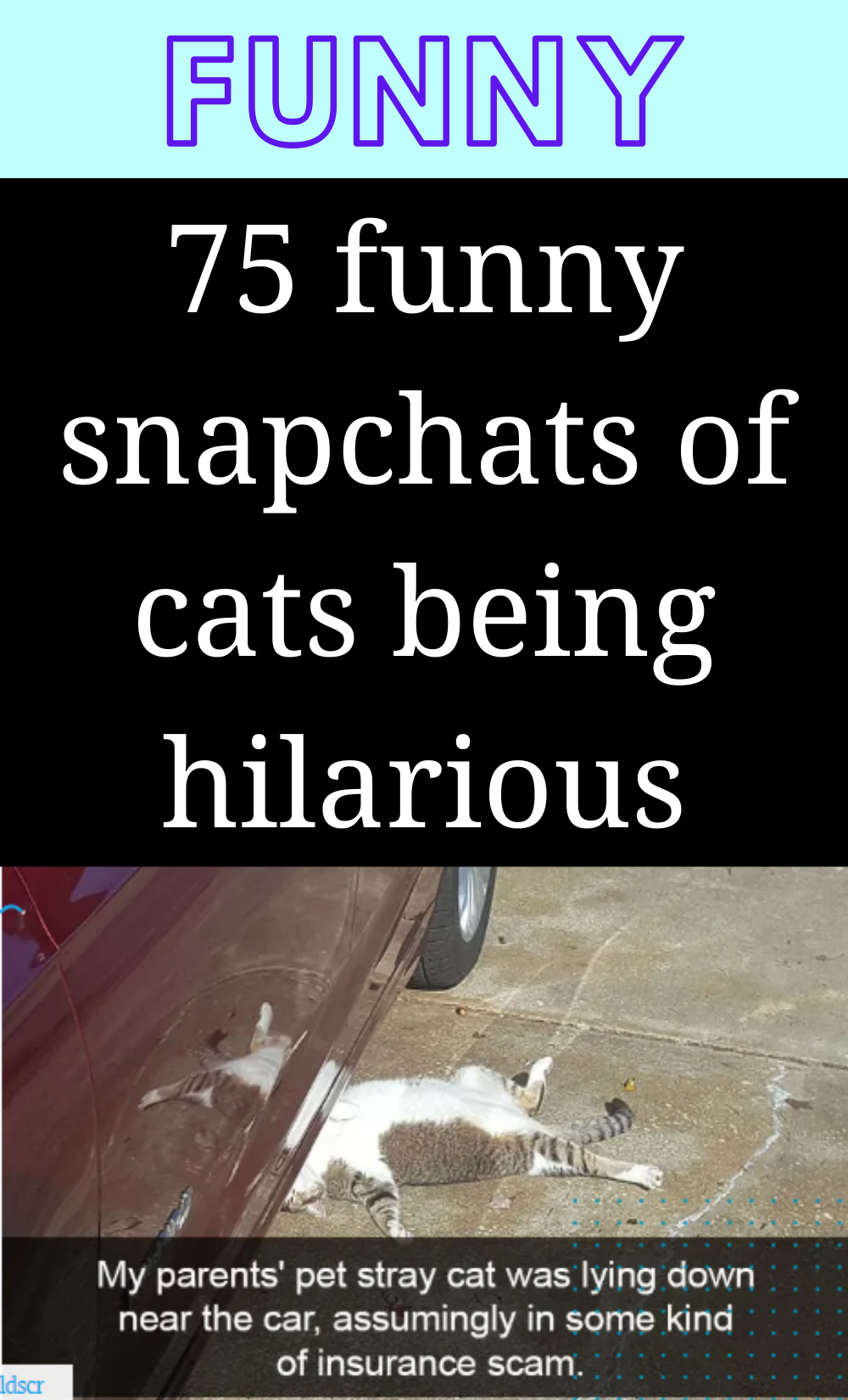 70+ hilariously funny cat photos captured at the perfect time