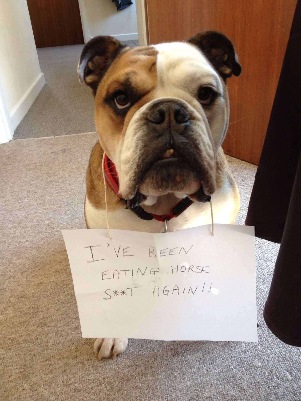 My bulldog loves to wolf down horse poo, we live just up the road…