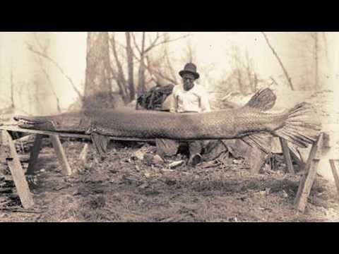 Alligator Gar released in Kentucky - YouTube