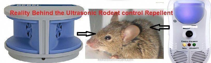 Pest Control Measures For Effective Flea Prevention Electronic Pest Control Best Pest Control Pest Control