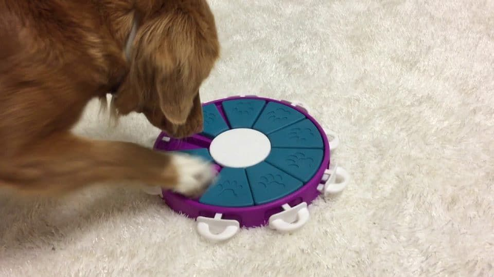 Pin On Dog Toys And Training Ideas