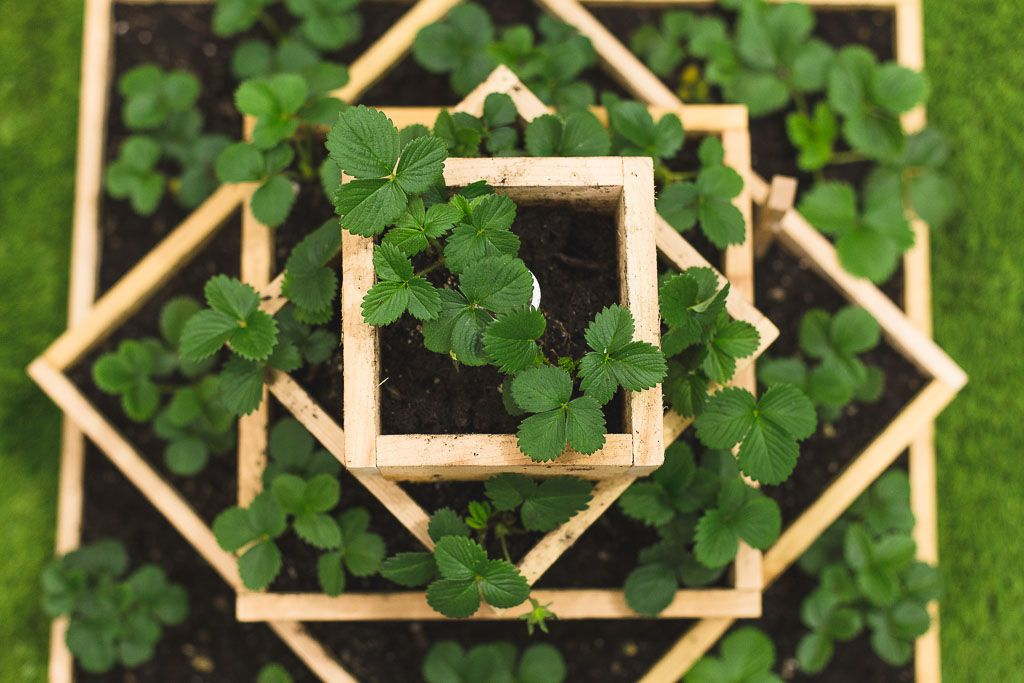 How To Build A Strawberry Planter Dunn Diy Garden