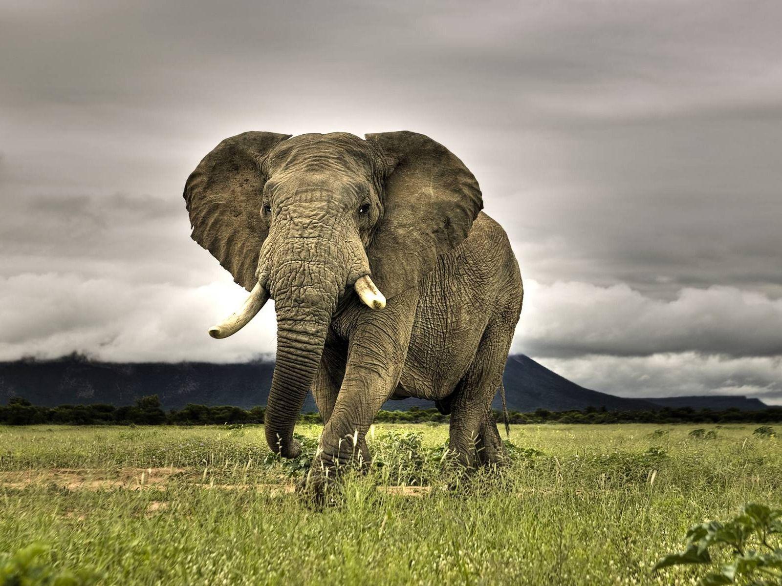 Animales en HD (High Definition) | Elefantes, Increíble y Animales