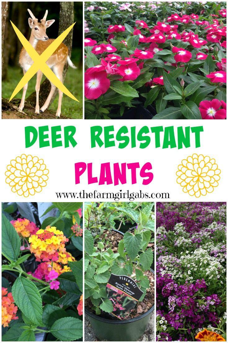 Deer Resistant Plants On The Blog Pinterest Deer Resistant
