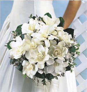 Wwwbouquet Sposait.Gardenia Bouquet Bouquet Matrimonio Bouquet Sposa