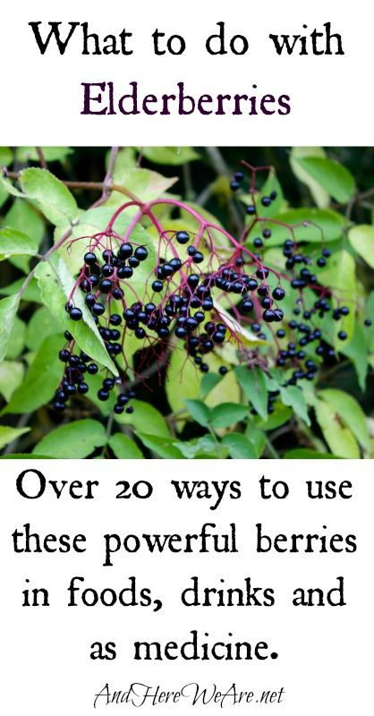 53893e0b73aa What to do with elderberries